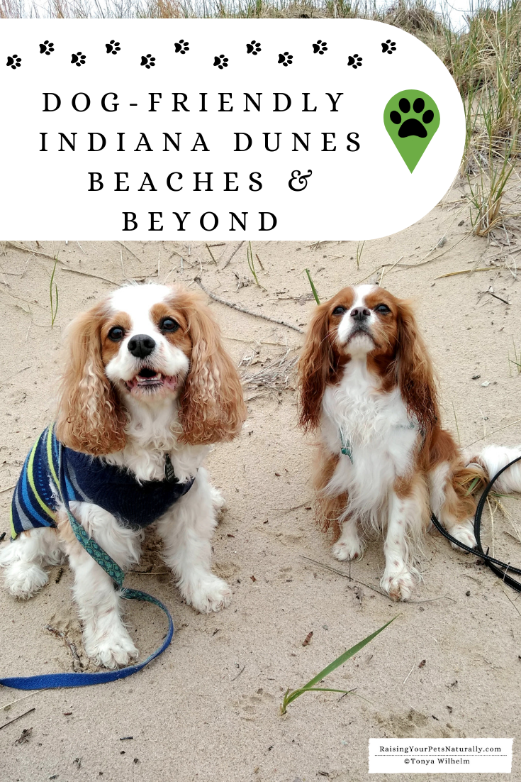 Road Trip with a Dog to Indiana Dunes National Park | Dog-Friendly Indiana Travel Guide
