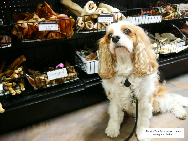 Healthy pet stores in Northern Indiana