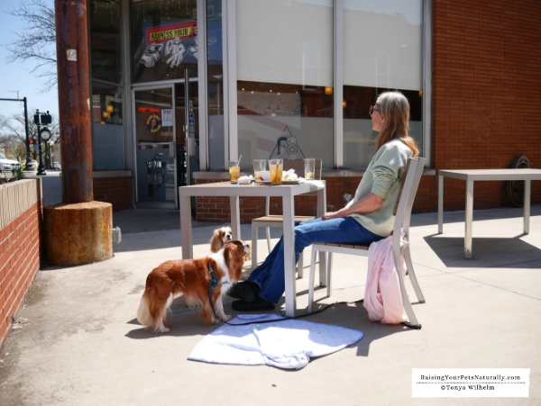 Best dog friendly patios in Indiana