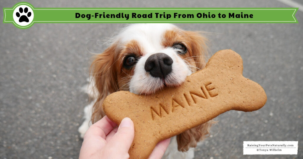 Traveling to Maine in a car