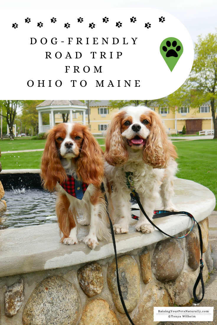 Dog-Friendly Road Trip From Ohio to Maine. One Dog\'s Travel Bucket List Adventure. #DextersDestinations #RaisingYourPetsNaturally #DogFriendly #PetFriendly #DogFriendlyMaine #DogRoadTrip #TravelingwithDogs