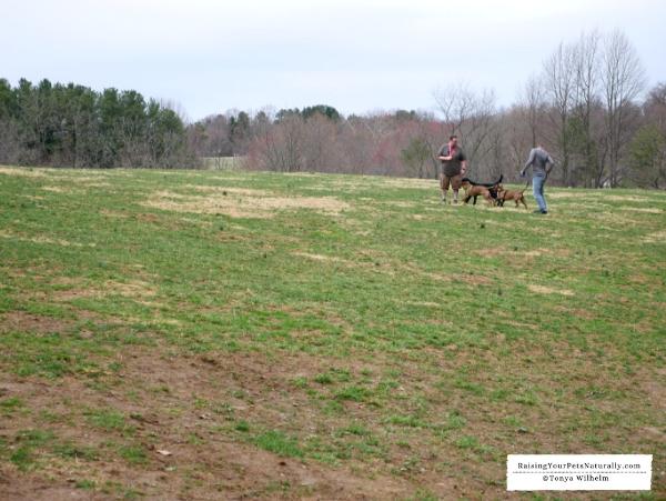 Delaware dog parks