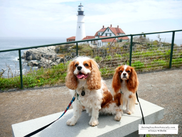Pet friendly trolley tours