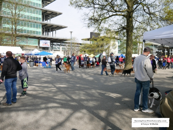 Indy Humane's Mutt Strut Event