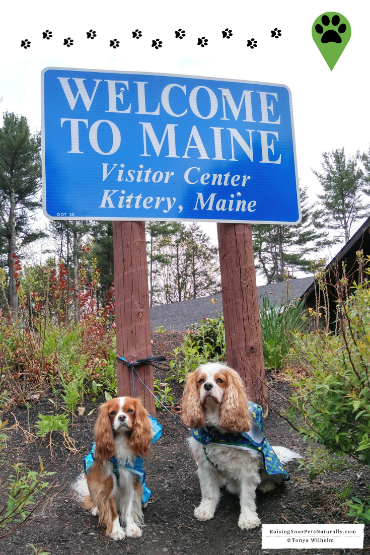 Pet-Friendly Portland Maine Travel Guide. Dexter The Dog\'s Bucket List Destination. #DextersDestinations #RaisingYourPetsNaturally #DogFriendly #PetFriendly #DogFriendlyMaine #DogFriendlyPortland #PortlandMaine #PetFriendlyMaine #PetFriendlyPortland