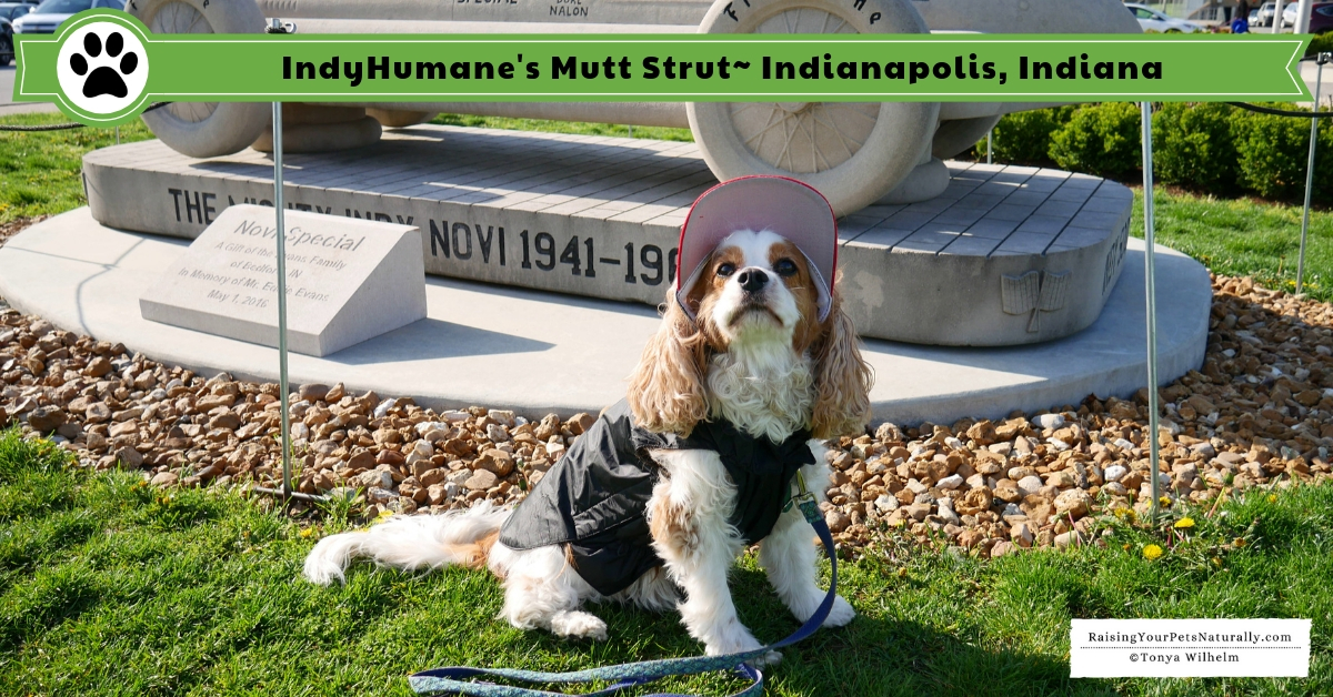 Dog-friendly Indianapolis