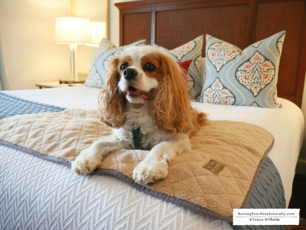 Pet friendly inn in New England