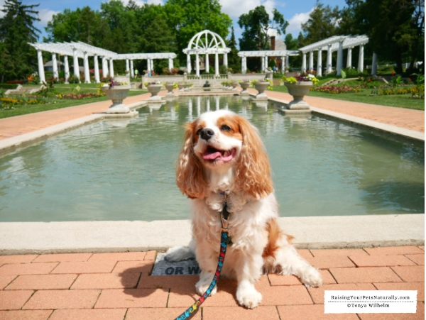 Rose gardens in Indiana that are pet friendly