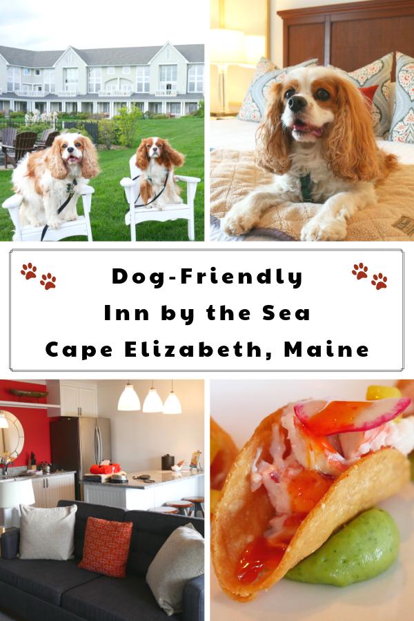Inn by the Sea a Pet-Friendly Luxury Oceanfront Resort Outside of Portland, Maine | Dog-Friendly Maine Weekend Getaway