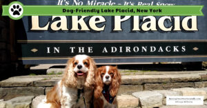 Dog-Friendly Vacations with Dexter The Dog | Lake Placid, New York Pet-Friendly Travel Guide