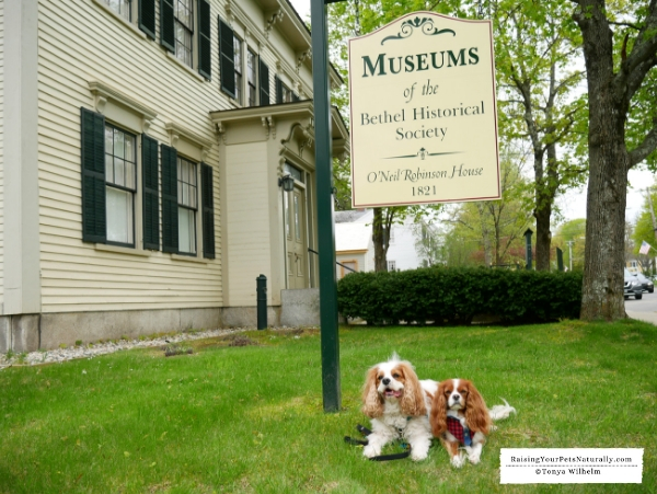 Pet friendly attractions in Maine