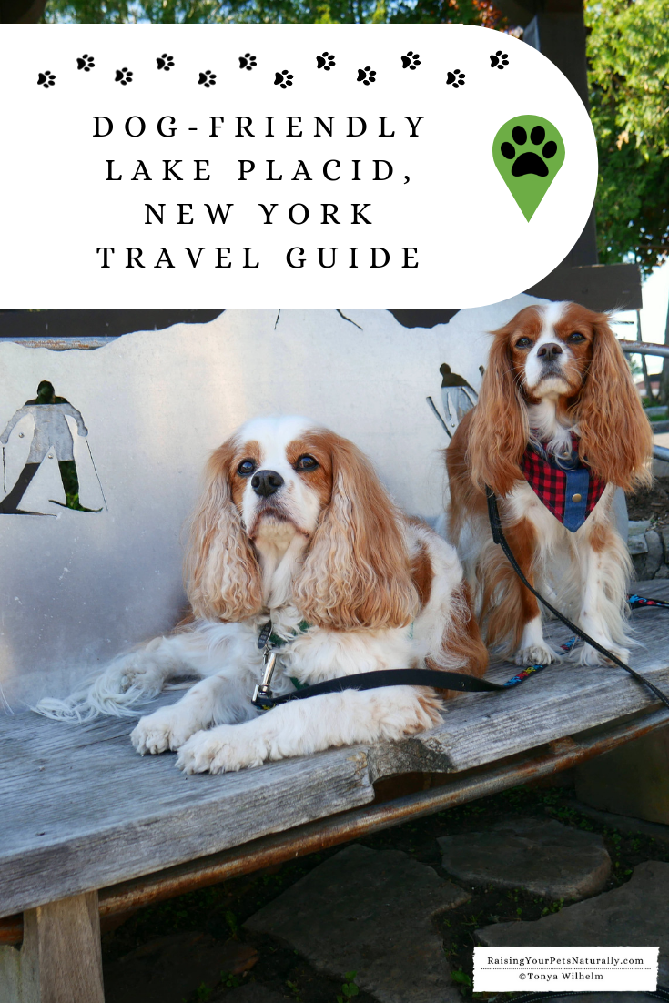 Dog-Friendly Vacations with a Dog. Lake Placid, New York Pet-Friendly Travel Guide.  #DextersDestinations #raisingyourpetsnaturally #roadtripwithdog #dogfriendlyroadtrips #dogfriendlyvacations #petfriendlyvacations #dogroadtrip #bestvactionswithdogs #petfriendlyvacationideas