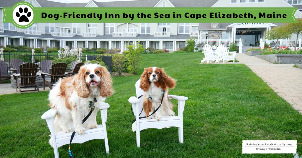 Luxury dog-friendly spa hotels