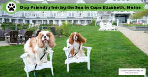 Inn by the Sea a Pet-Friendly Luxury Oceanfront Resort Outside of Portland, Maine | Dog-Friendly Maine Weekend Getaway