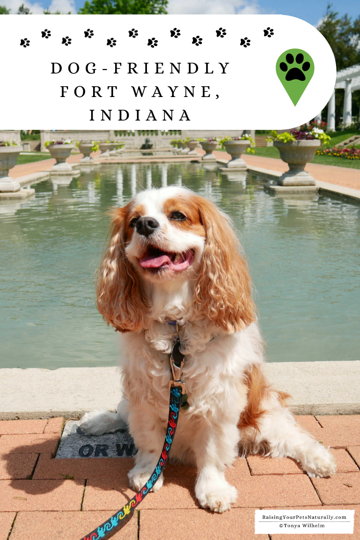 Weekend Road Trip with a Dog to Fort Wayne, Indiana. Fort Wayne was a fun dog-friendly city with outdoor restaurants, a nice pet-friendly hotel and fun dog-friendly attractions.  #DextersDestinations #RaisingYourPetsNaturally
