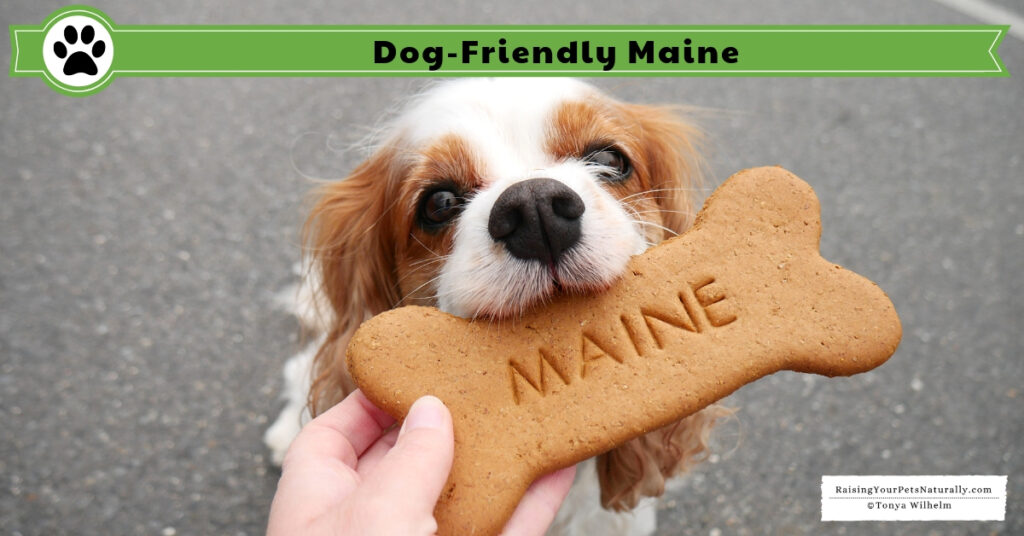 Dog-friendly Maine Guide