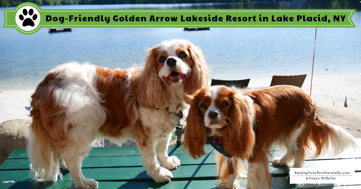 Luxury dog friendly hotels