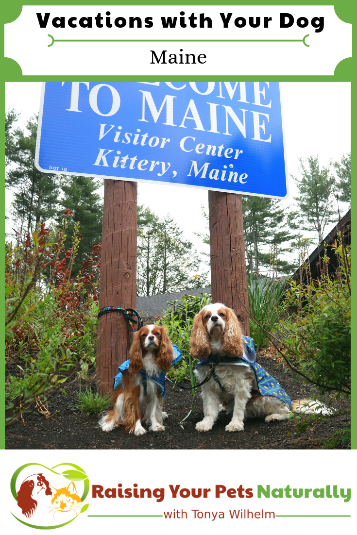 Dog-friendly Maine vacations, hotels and attractions. #DextersDestinations #dogfriendlytravelguides #dogfriendlymaine #petfriendlymaine #dogfriendlynewengland #petfriendlymainehotels #dogfriendlymaineattractions #vacationswithdogs #bestdogvacations