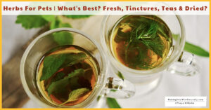 Herbs for Dogs and Cats | What's Best for Your Pets? Fresh Herbs, Herbal Tea, Tinctures, or Dried Herb