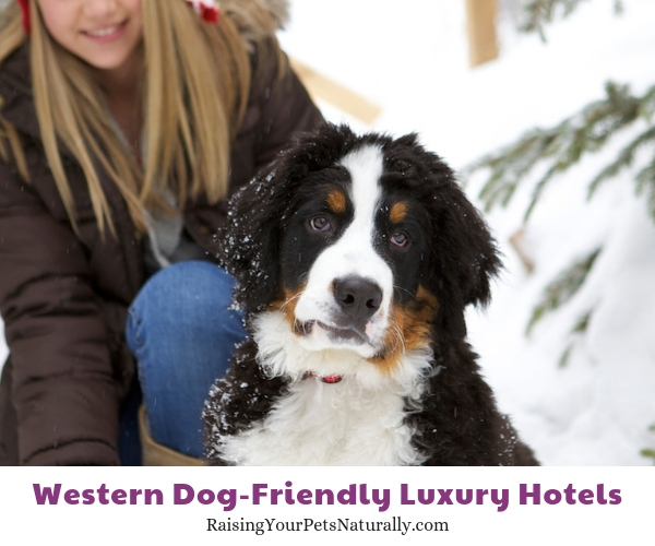 Pet friendly resorts in Utah
