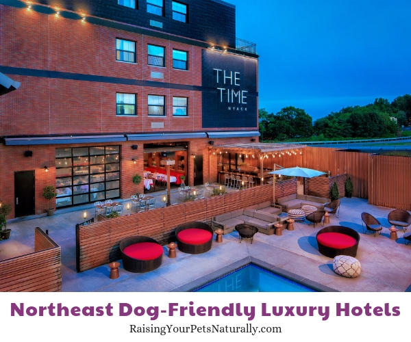 Top hotels in NY that allow dogs