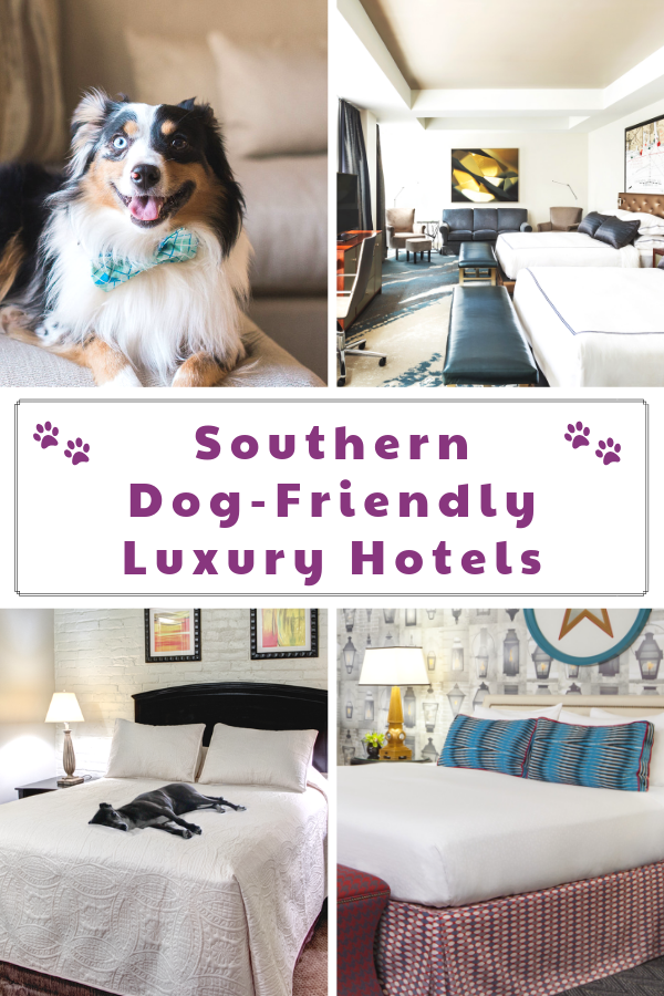 Top Dog-Friendly Resorts and Luxury Pet-Friendly Hotels in the South. Check out one of these top pet-friendly hotels. #raisingyourpetsnaturally #dogfriendly #petfriendly #travelingwithdogs #petfriendlyhotels #dogfriendlyhotels