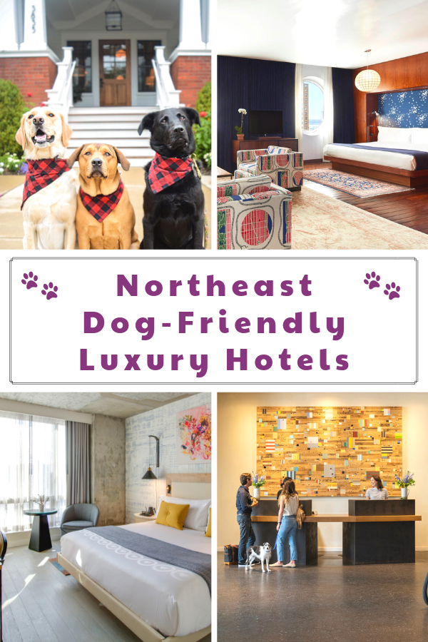 The Best Luxury Pet-Friendly Hotels in the Northeast Region. If you are planning a dog-friendly Northeast vacation, you won\'t want to miss these pet-friendly luxury hotels. #raisingyourpetsnaturally #dogfriendly #petfriendly #dogfriendlyhotels #petfriendlyhotels #travelingwithdogs #luxurypets #luxurydogs