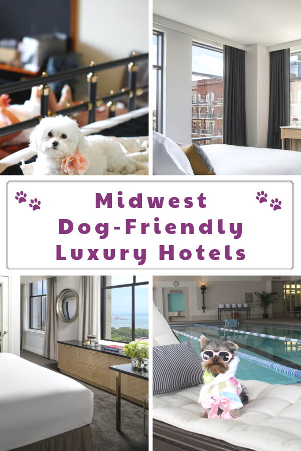 Top dog-friendly luxury hotels in the Midwest. If you are taking a road trip with your dog to the Midwest, check out these pet-friendly hotels.  #raisingyourpetsnaturally #luxuryhotels #dogfriendly #petfriendly #travelingwithdogs #dogfriendlyhotels #petfriendlyhotels