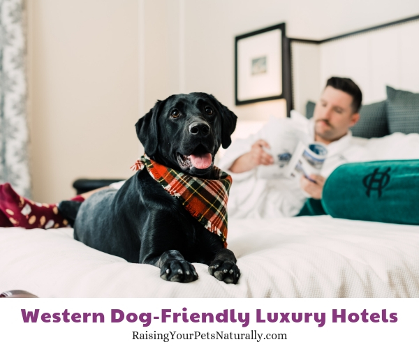 Best pet friendly luxury hotels in Colorado