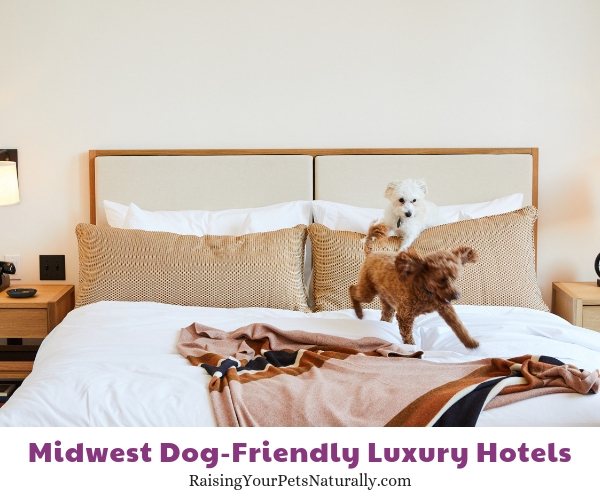 Five star pet friendly hotels in Michigan