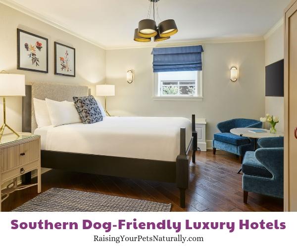 Virginia pet-friendly five star hotels