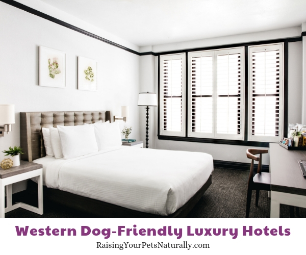 Luxury dog-friendly San Francisco