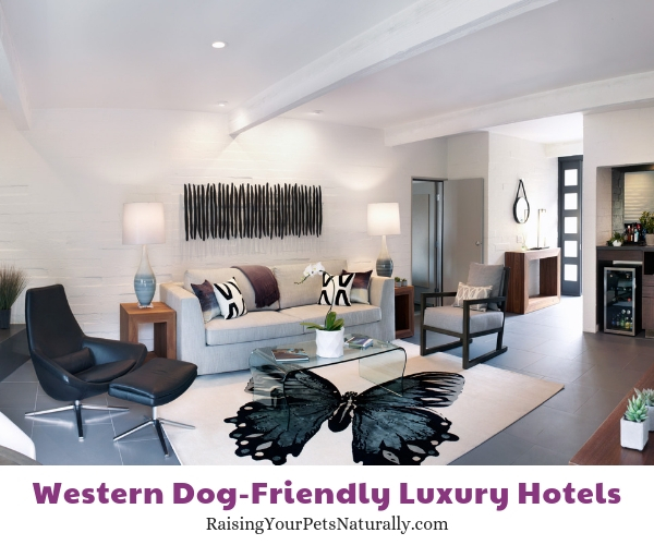 Pet friendly resorts in Arizona