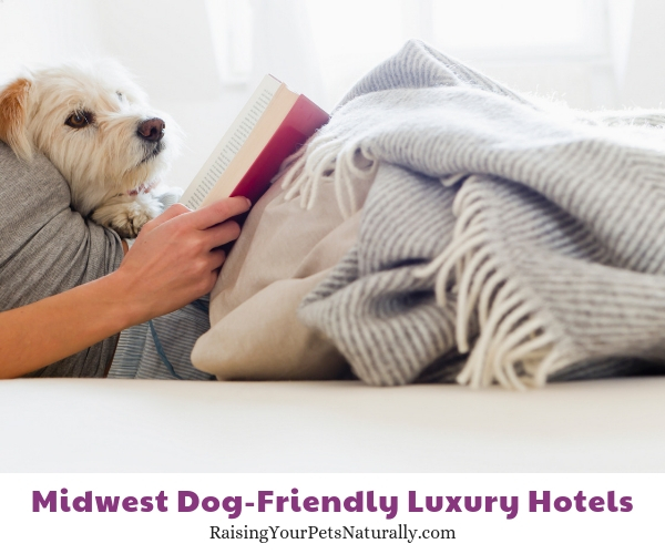 Best dog-friendly hotel chains