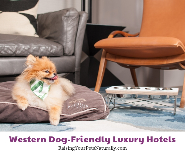 Arizona pet-friendly hotels