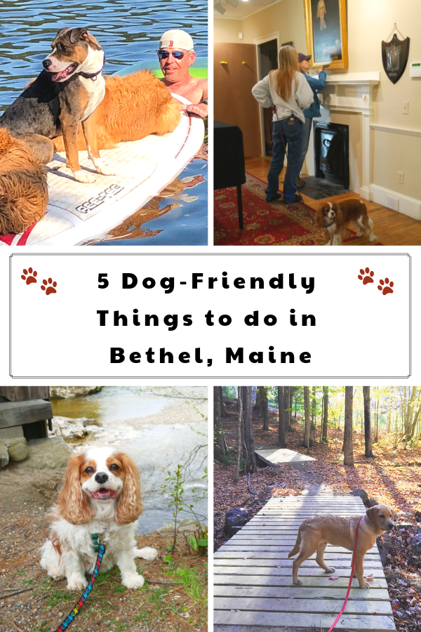 5 Dog-Friendly Things to do in Bethel, Maine.  These dog-friendly Maine attractions are something to see.  #DextersDestinations #RaisingYourPetsNaturally #dogfriendly #petfriendly #dogfriendlymaine #maine #dogroadtrip