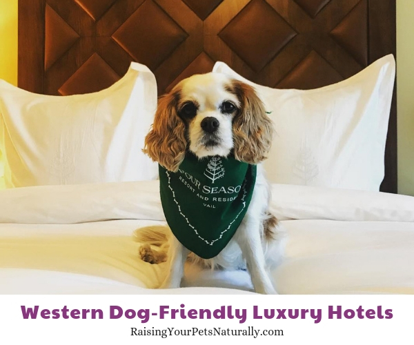 Vail Colorado pet friendly hotels