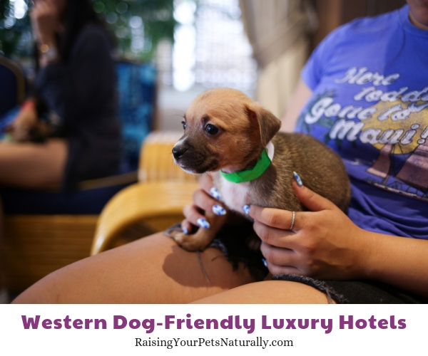 Hawaii pet friendly resorts