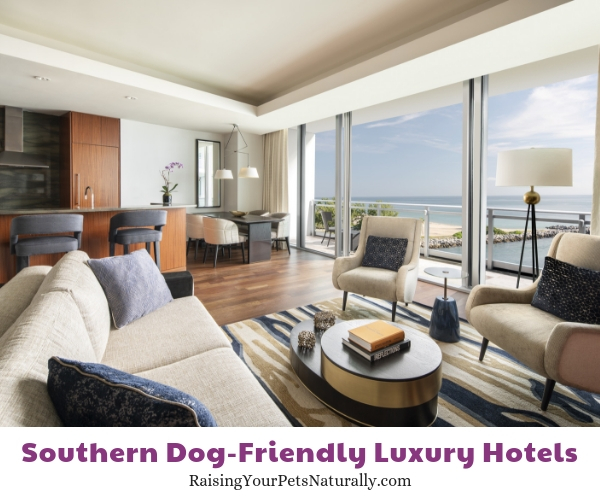 Top rated pet friendly hotels in Florida