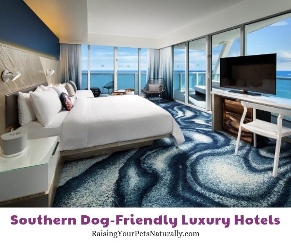 Florida dog friendly beach hotels
