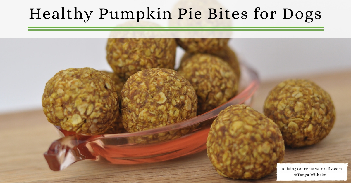 Healthy Homemade Dog Treats With Pumpkin Pie Bites