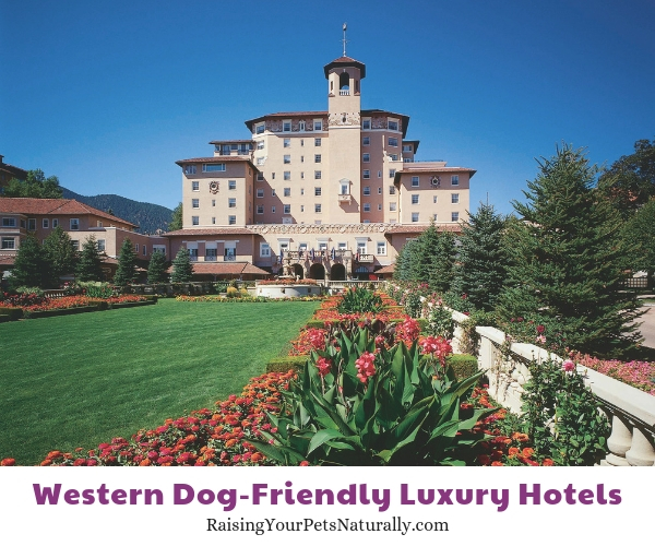Luxury hotels that are dog friendly