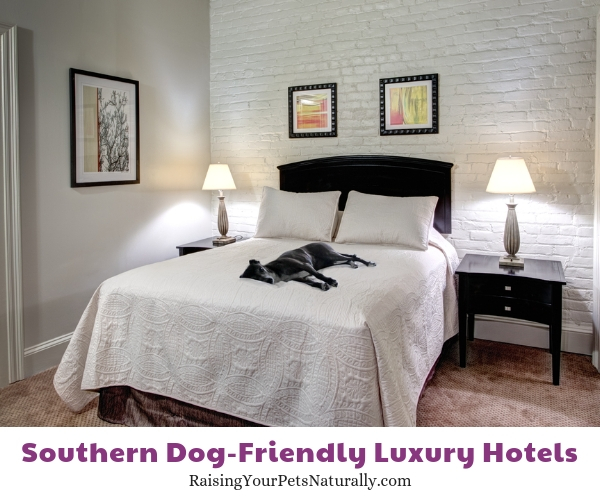 Best pet friendly hotels in the south