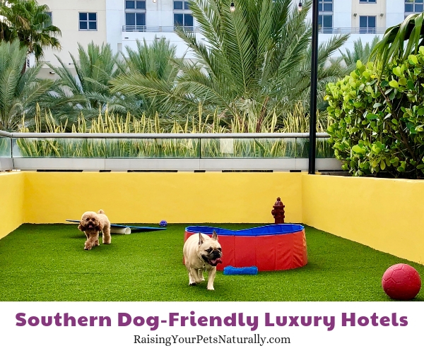 The best dog friendly hotels