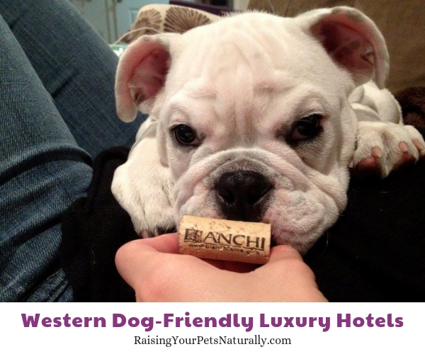 Best pet friendly resorts in California
