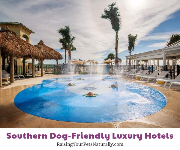 Luxury Florida resorts that allow pets