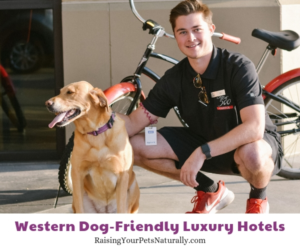 5 star pet-friendly resorts in Idaho