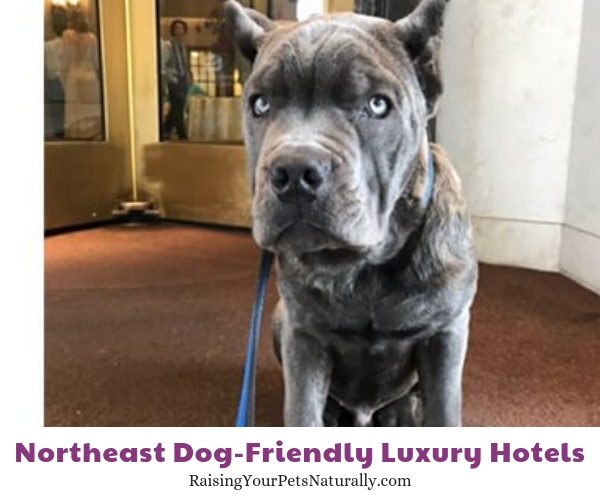 Luxury pet friendly hotels in Maryland