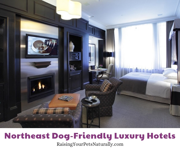 Five star pet friendly Massachusetts hotels