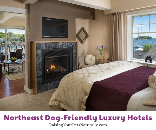 New england luxury dog friendly resorts